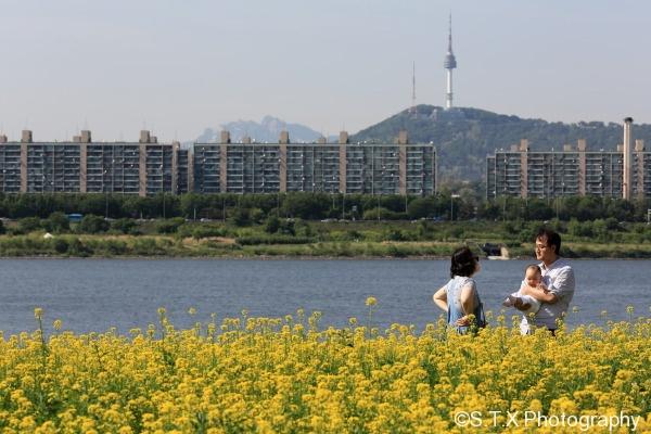首尔油菜花庆典
