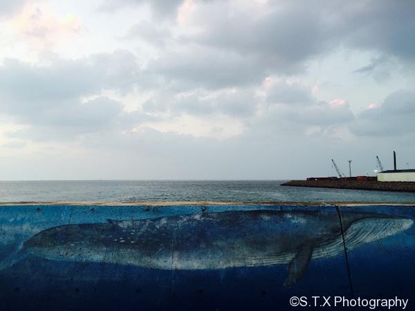 济州岛翰林港