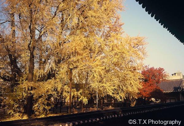 首尔的秋天、成均馆大学